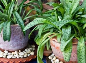 House plants, pots, garden supplies