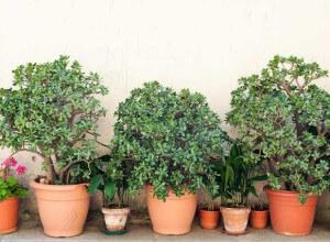 Bonsai plants, house plants