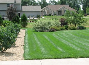 lawncare-2
