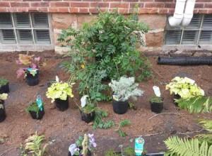 Perennial plantings, Garden Center