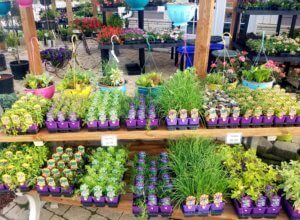 Herbs and annuals