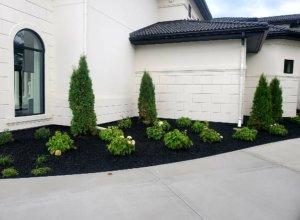 Hydrangeas, Arborvitae, black mulch